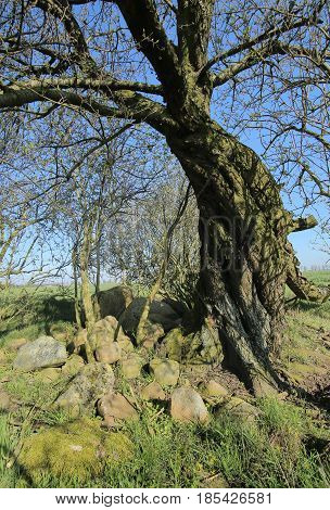 Ruined Megalithic Tomb Near Gross Zastrow In Germany