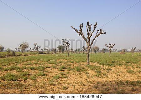 Rajasthan Arid Landscape