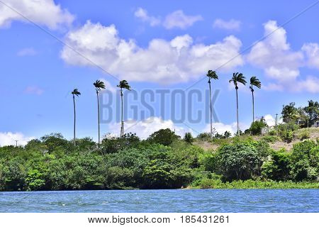 A small island and its coconut trees in the city of Piaçabuçu. Northeast of Brazil.