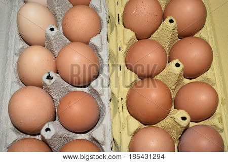 Domestic eggs from domestic chickens. food, protein