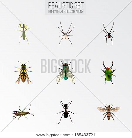 Realistic Spider, Locust, Bee And Other Vector Elements. Set Of Animal Realistic Symbols Also Includes Pismire, Bee, Locust Objects.