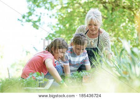 Elderly woman having fun gardening with grandkids