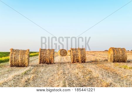 Row of straw bales on the field. Farm landscape with hay rolls.