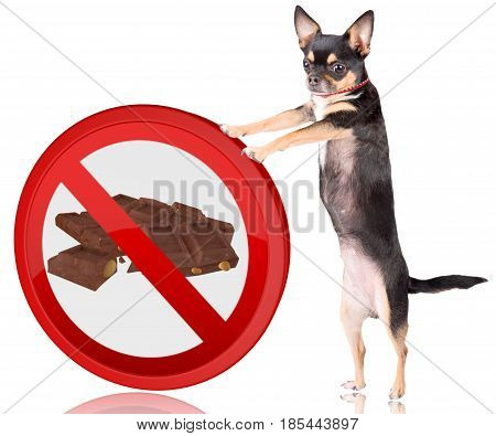 Cute dog chihuahua Push the forbidden road sign away