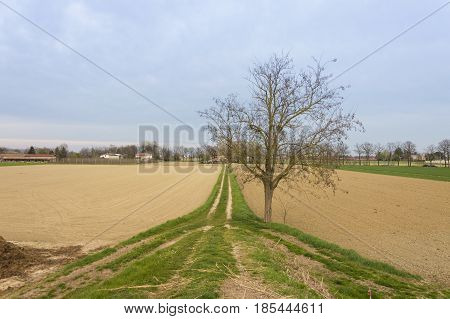 Really soft landscape with a central tree without leaves