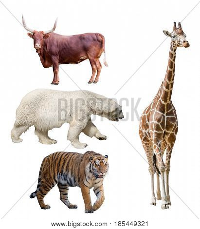 group of four large animals isolated on white background