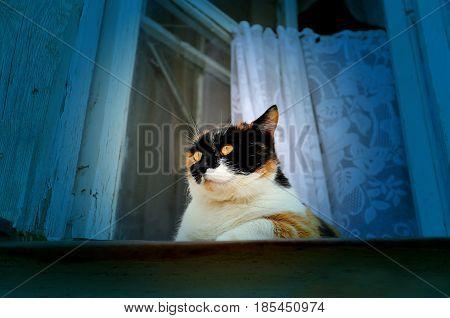 Beautiful tricolor kitten sitting on the window