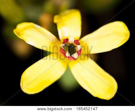 beautiful little yellow flower in nature . A photo