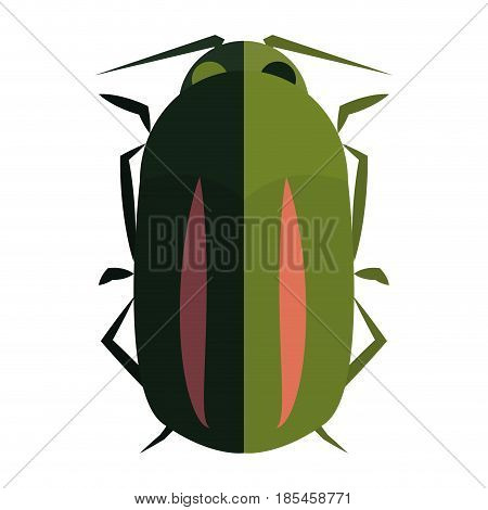 Isolated Colored Beetle