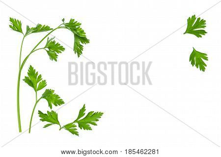 leaf parsley on white background with copy space