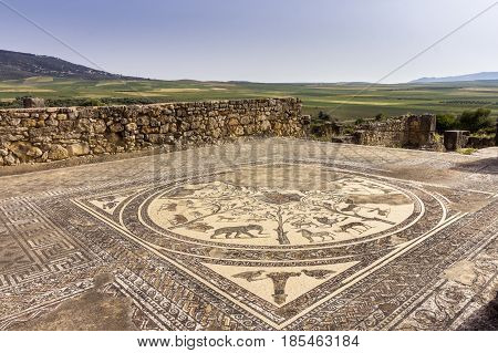 Floor mosaic in Orpheus house at archaeological Site of Volubilis ancient Roman empire city Unesco World Heritage Site located in Morocco near Meknes
