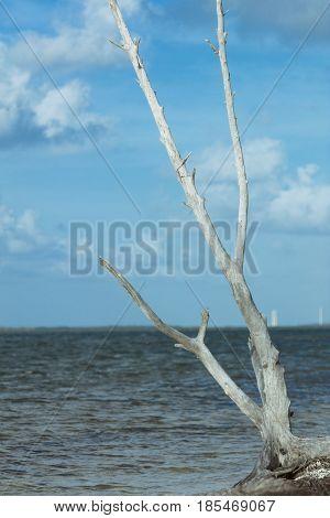 Driftwood on Beach at Sigsbee Key West Florida