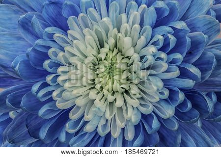 A blue and white flower filling the frame