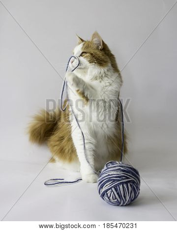 A cat playing with a ball of yarn against a white background