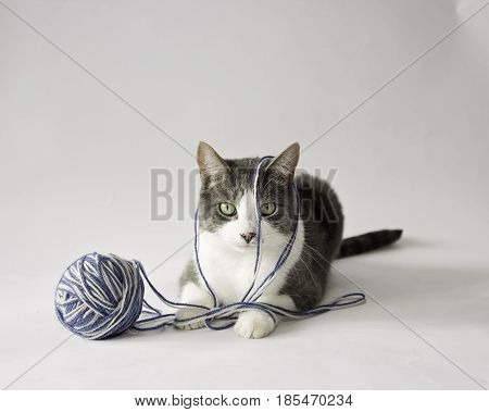 An annoyed cat lying down with a ball of yarn against a white background