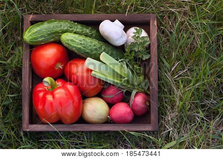 Vegetables in a box for salad on the grass in a summer garden