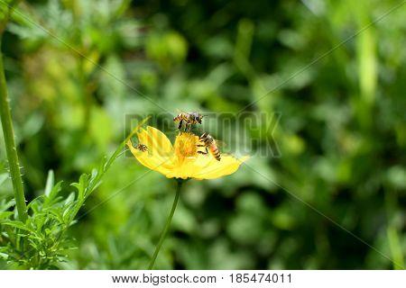 O voo simplesmente sem aerodinâmica e totalmente impossível de se explicar da abelha!