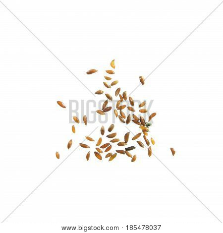 Seeds of dahurian gentian (Gentiana dahurica) isolated on white background