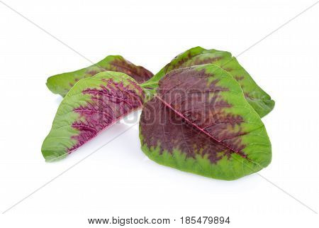 fresh red spinach leaf on white background