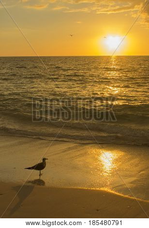 A seagull contemplating the beauty of the sunset