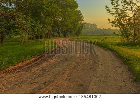 Morning on a winding forest road. Spring along the road green grass and trees with foliage. part of the sky painted blue and the other half a yellow sun.