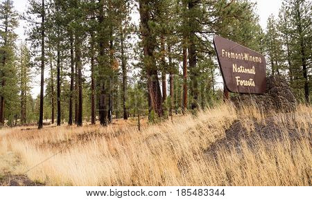 A horizontal composition of a national forest sign in the west