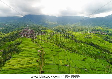 Aerial view of the green rice fields. Bali Indonesia. rice fields in bali. rice fields farm. rice fields aerial. rice fields green. rice fields indonesia. rice fields landscape.