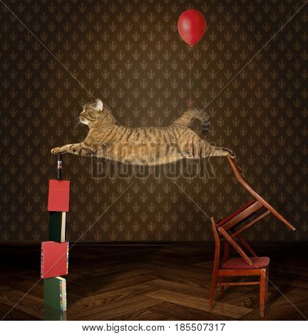 The cat acrobat is performing a circus act.