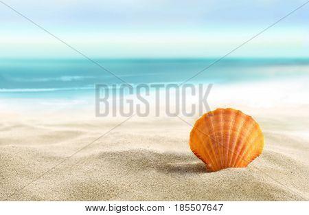 Beautiful Shell on the white sandy beach