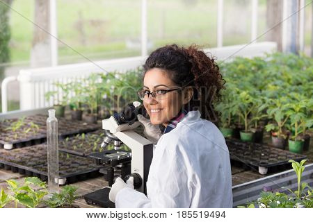 Scientist Sitting At Microscope In Greenhouse