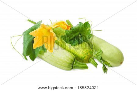 Three fresh vegetable marrows and stalk with leaves tendrils and flowers on a light background