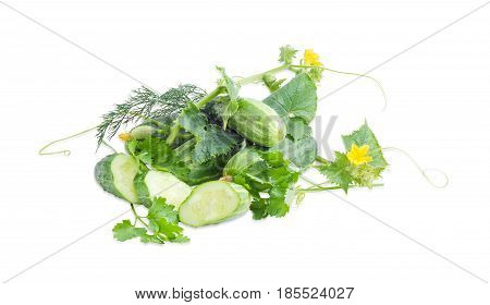 Several whole fresh cucumbers one sliced cucumber cucumber stalk with leaves tendrils and flowers and twigs of the parsley and dill on a light background