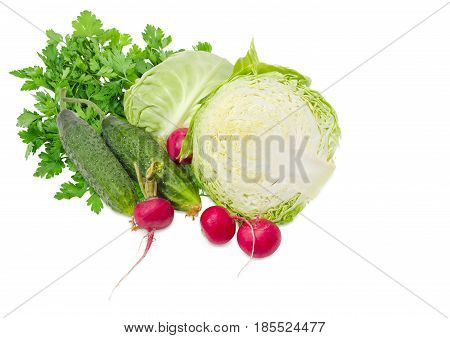 Two halves of a head of the young fresh white cabbage two fresh cucumbers and several red radish against bunch of the parsley on a light background