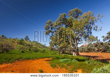 Brachina Gorge in the Flinders Ranges