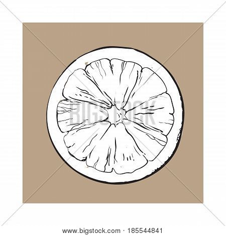 Top view round slice, half of ripe grapefruit, orange, black and white sketch style vector illustration on brown background. Hand drawn grapefruit cut in half, round slice