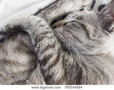 Sleeping cat Pet Relax Comfortable furry paw
