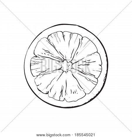 Top view round slice, half of ripe grapefruit, orange, black and white sketch style vector illustration on white background. Hand drawn grapefruit cut in half, round slice