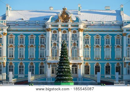 Christmas tree on the background of the main building of the Catherine Palace. Winter in Tsarskoye Selo. Saint Petersburg. Russia