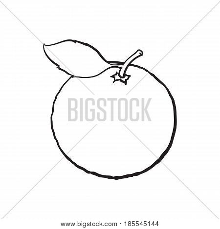 Whole shiny ripe grapefruit, orange with a leaf, hand drawn black and white sketch style vector illustration on white background. Hand drawing of unpeeled round whole grapefruit with leaf