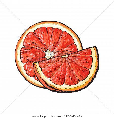 Half and quarter of ripe pink grapefruit, red orange, hand drawn sketch style vector illustration on white background. Hand drawing of unpeeled grapefruit cut in half and piece