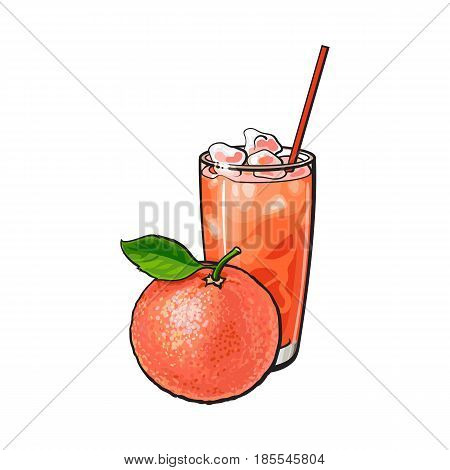 Whole grapefruit and glass of freshly squeezed juice with ice and straw, sketch style vector illustration on white background. Hand drawn glass of grapefruit juice with ice and whole grapefruit