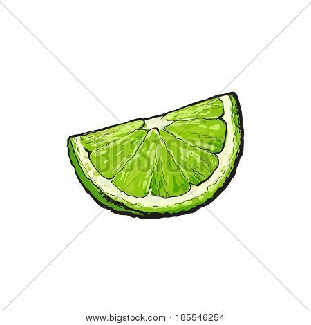 Quarter, segment, piece of ripe green lime, hand drawn sketch style vector illustration on white background. Hand drawing of unpeeled grapefruit qurter, piece
