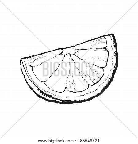 Quarter, segment, piece of ripe lime, hand drawn sketch style vector illustration on white background. Hand drawing of unpeeled grapefruit qurter, piece