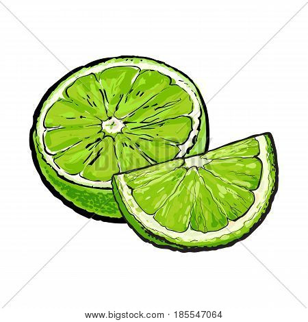 Half and quarter of ripe green lime, hand drawn sketch style vector illustration on white background. Hand drawing of unpeeled lime cut in half and piece