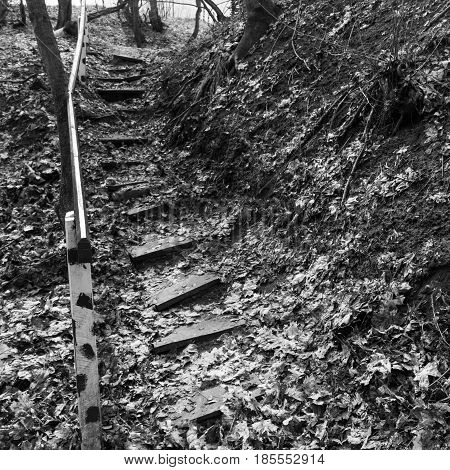 Wooden steps in the ground. Abandoned staircase in the woods. Square black and white photo.