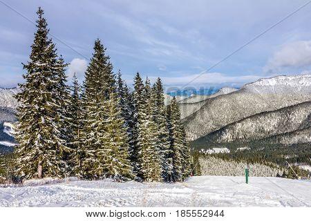 Winter Tatry landscape snow forest in Slovakia
