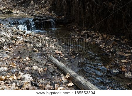 Small stream in the forest area. Wild landscape. Rectangular photo.