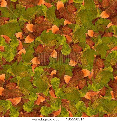 Seamless Background With Bright Multicolored Leaves Of Raspberry, Hawthorn, Aspen