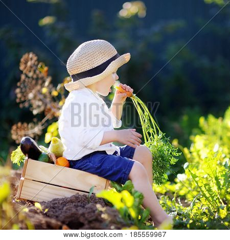 Little Boy Eating Carrot Sitting On Wooden Crate With Vegetables