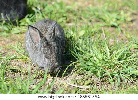 Cute Gray Baby Rabbit On The Grass Close Up